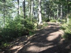 Woodland path wpr