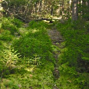 EL forest sq wpr
