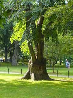 Public garden tree wpr