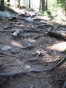 BH roots on trail wpr