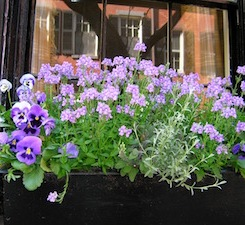 Many window boxes!