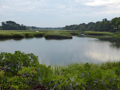 salt-marsh