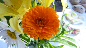 Orange King