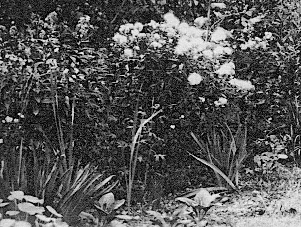 1924 Feb EL garden