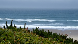 Conifers and ocean