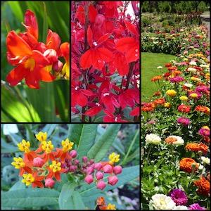 Summer's blooms