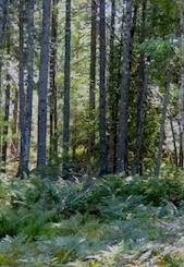 Loring woods