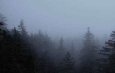 Thick blankets of fog