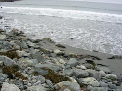 Maine beach rocks